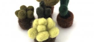 Felted Cacti - Cactusjes vilten